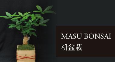 MASU BONSAI 枡盆栽
