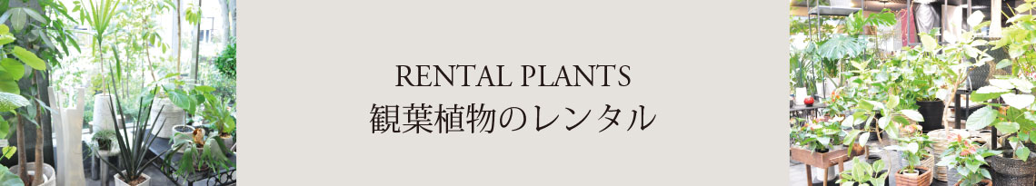RENTAL PLANTS OUR SERVICES 観葉植物のレンタル