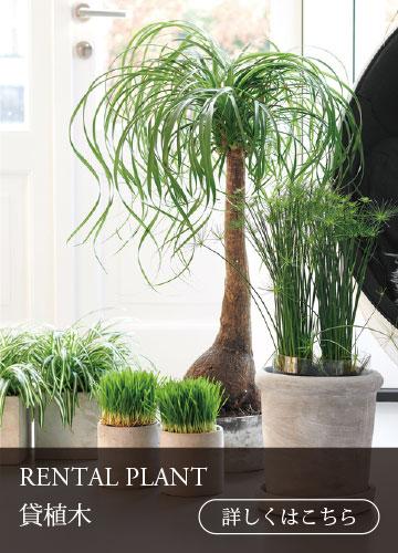 top3-rental-plant