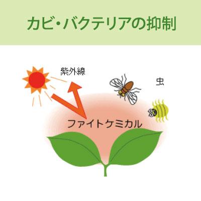カビ・バクテリアの抑制