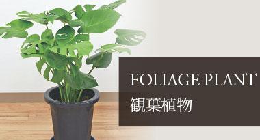 FOLIAGE PLANT 観葉植物