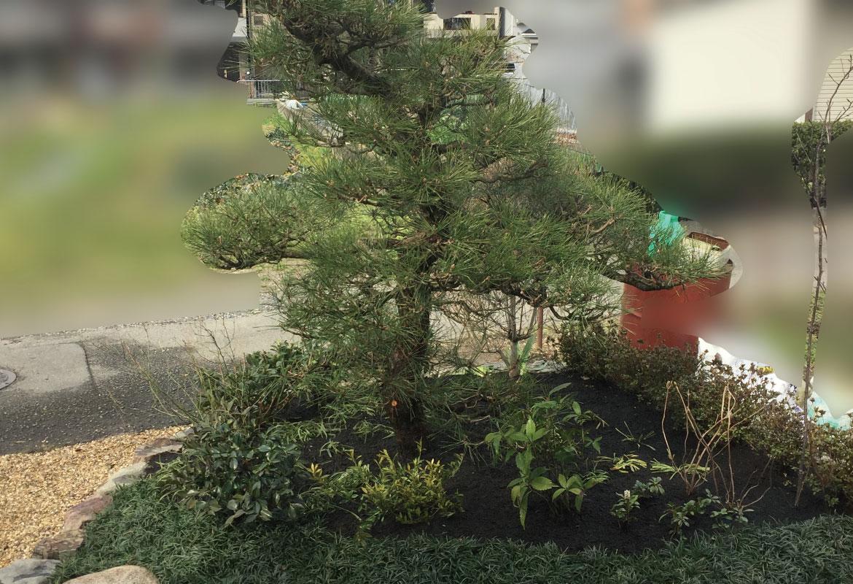 松を主木にした和風の庭